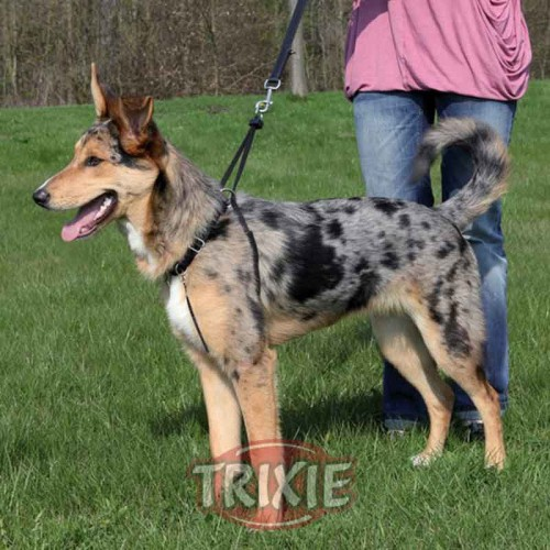 Easy Walk Basic Trixie