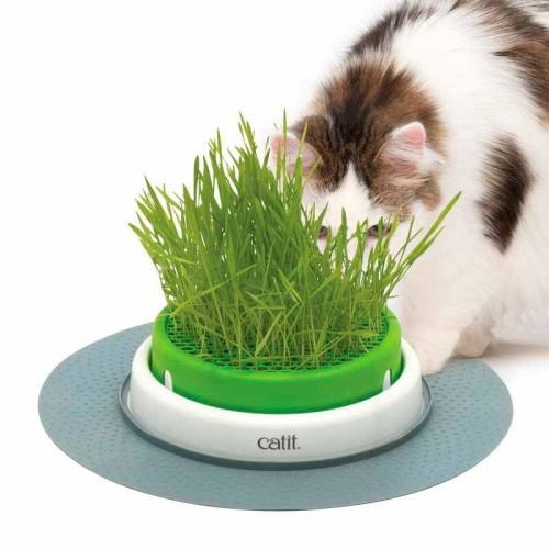 Germinador de hierba gatera Cat It