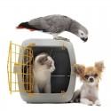 Transportines y bolsos para gatos