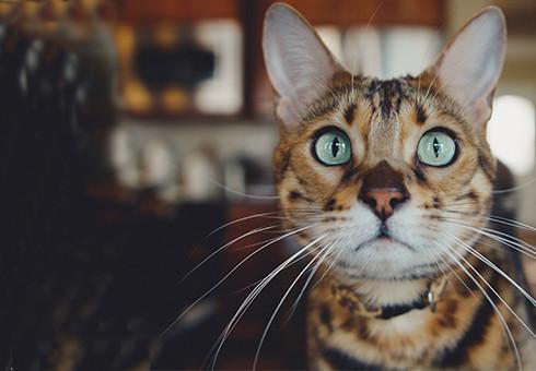 Soy de Gato
